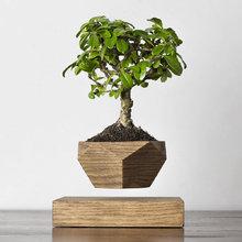 Левитирующие растения Леплант Wood Бонсай темный