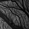 Инсталляция Branches