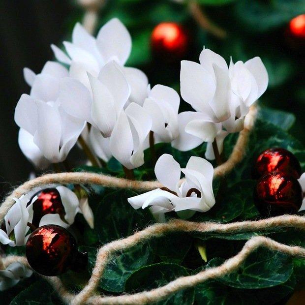 Фотография:  в стиле , Советы, Мария Зайцева, цветочные декорации к Новому году, новогодние цветы – фото на InMyRoom.ru