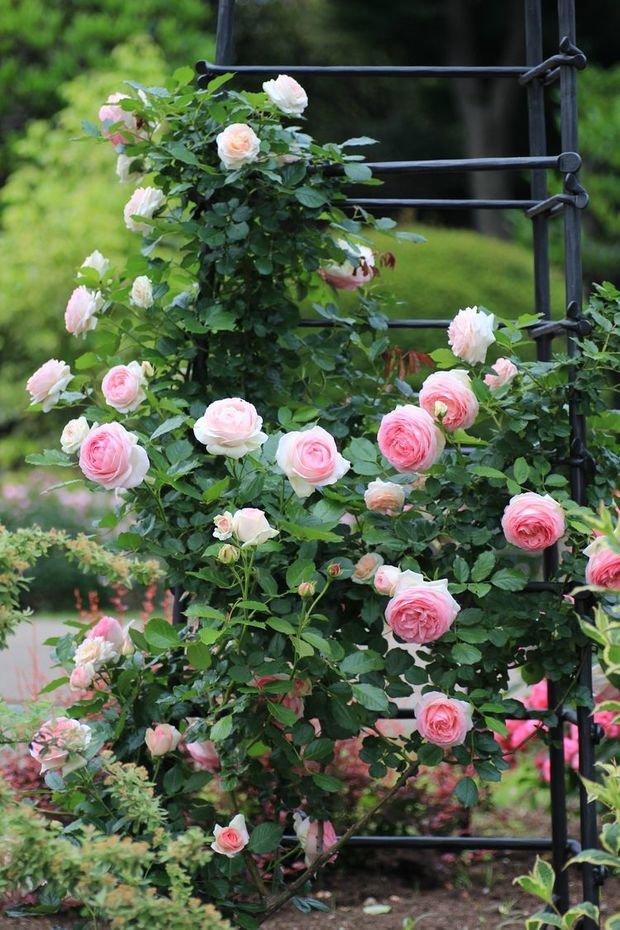 Фотография: Флористика в стиле , Советы, Derevo Park, как выбрать растения для сада, растения – фото на INMYROOM