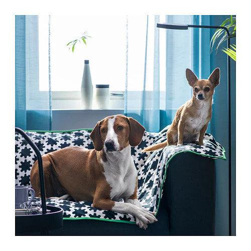 Фотография: Гостиная в стиле Современный, Скандинавский, Гид, ИКЕА, ИКЕА, животные дома – фото на INMYROOM