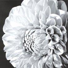 """Красивый полиптих на холсте """"Чёрно-белые цветы"""""""