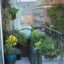 Фотография: Балкон в стиле Кантри, Эко, Советы, Зеленый, Оксана Шабалина, овощи на балконе, сад пряных трав на балконе, вертикальное озеленение, что выращивать в тени, огород на балконе, мини-огород на балконе – фото на InMyRoom.ru