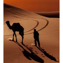 Дизайнерская модульная картина: Король пустыни