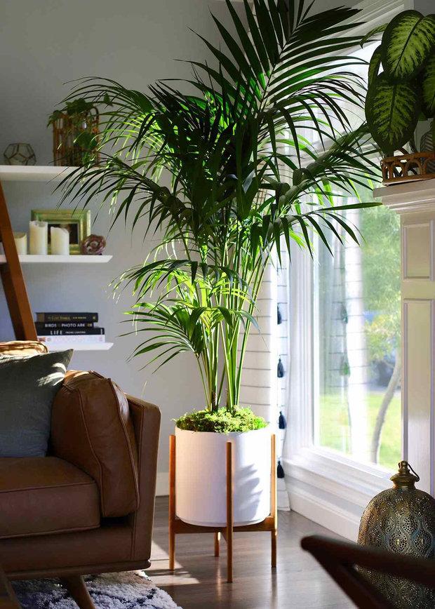 Фотография: Флористика в стиле , Декор интерьера, Кашпо, живые растения в интерьере, Как выбрать кашпо, Светлана Давыдова – фото на INMYROOM