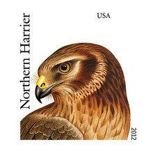 Картина (репродукция, постер): Birds of prey 5 -