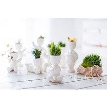 Набор для выращивания eco йог