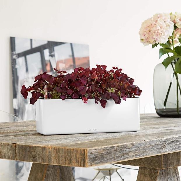 Фото из портфолио Кашпо для растений LECHUZA (Лечуза) CUBE GLOSSY TRIPLE от Lechuza – фотографии дизайна интерьеров на INMYROOM
