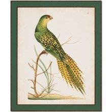 Птица в раме