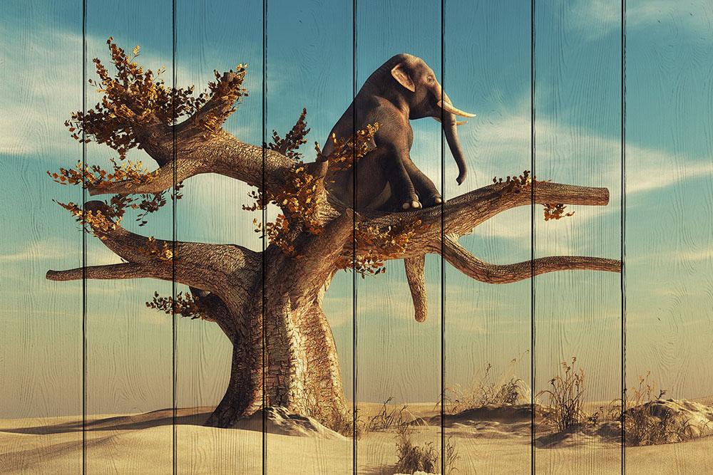 Слон на дереве картинка