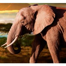 """Дизайнерская картина на холсте """"Слон на прогулке"""""""