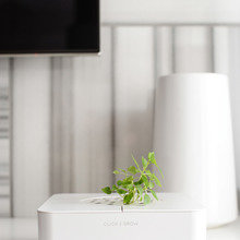 Фотография: Флористика в стиле , Лофт, Квартира, Дома и квартиры, Проект недели, Поп-арт – фото на InMyRoom.ru