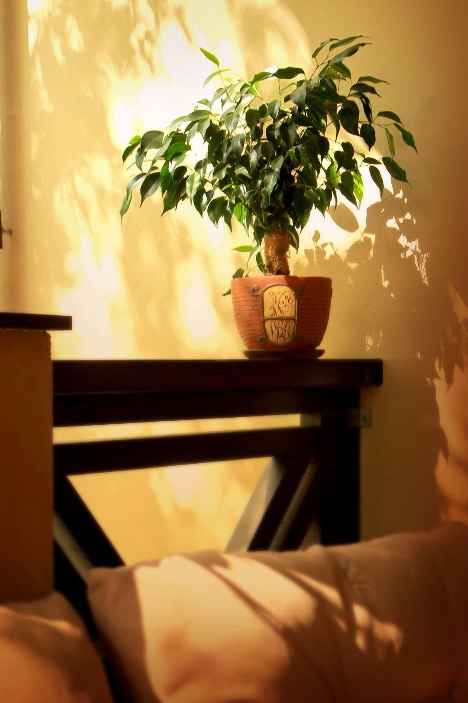 Фотография: Прочее в стиле , Прованс и Кантри, Декор интерьера, Дом, Дома и квартиры – фото на InMyRoom.ru