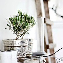 Фотография: Флористика в стиле , Балкон, Декор интерьера, Дом, Декор дома – фото на InMyRoom.ru