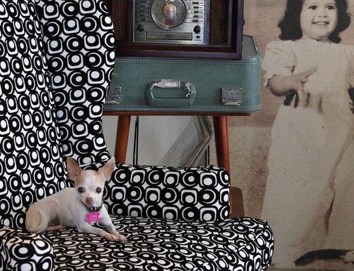 Фотография: Прочее в стиле , Декор интерьера, Мебель и свет, Декор дома, Кресло – фото на InMyRoom.ru