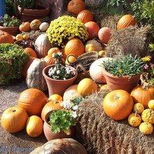 Фотография: Ландшафт в стиле Кантри, Современный, Стиль жизни, Сад – фото на InMyRoom.ru