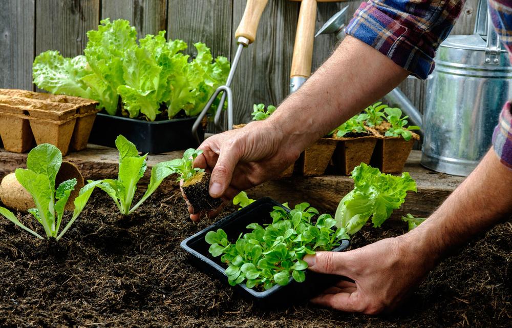 Как вырастить овощи без дополнительных затрат