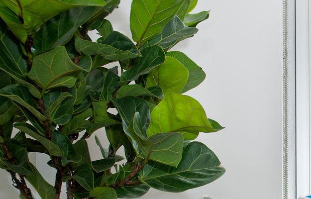 Комнатные растения в современном интерьере: 5 идей, 20 примеров — INMYROOM
