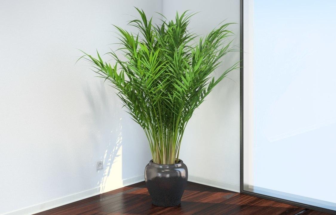 Как правильно пересадить пальму в другой горшок в домашних условиях?
